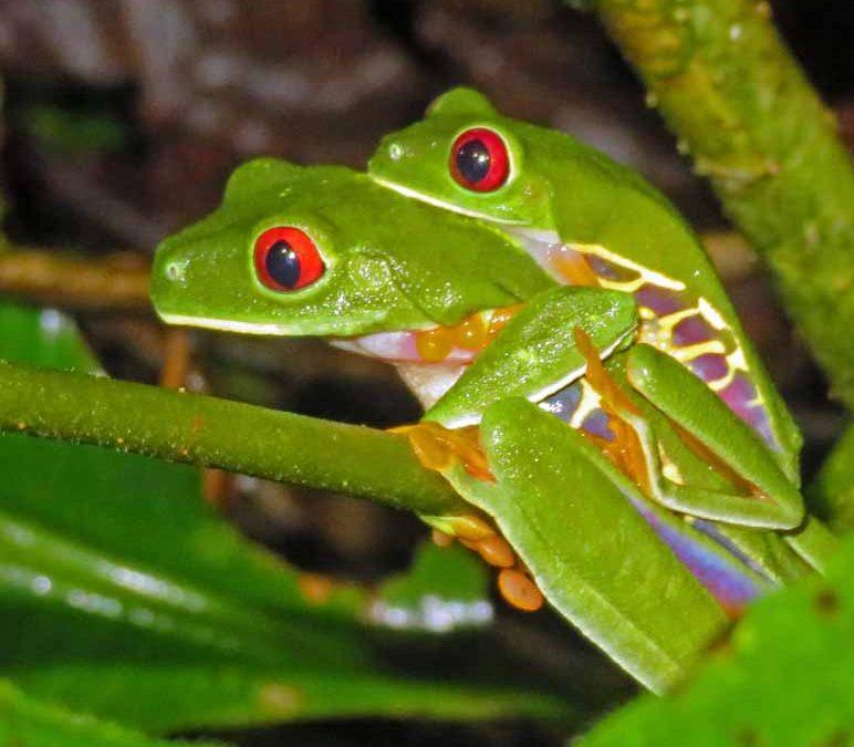 Pura Vida in Costa Rica III
