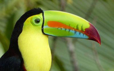 Pura Vida in Costa Rica I