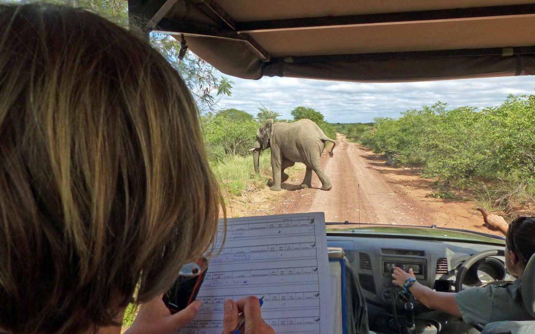 Jeden Tag ein Abenteuer-Volunteering bei LEO Africa