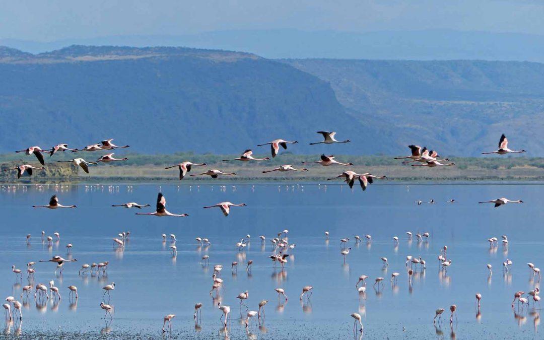 Rosa Flamingos und türkisfarbenes Meer