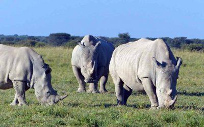 Sandtracks I – Elefanten, Nashörner und ein Top-Team